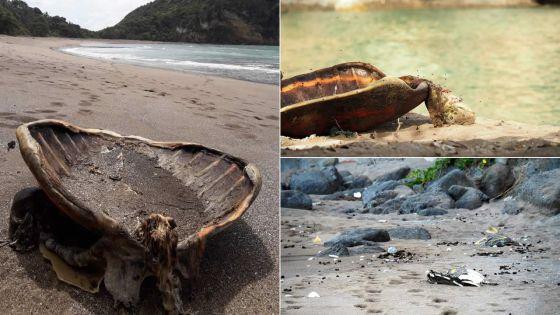 Braconnage d'espèces protégées à Mayotte : 28 cadavres de tortues découverts pendant le confinement