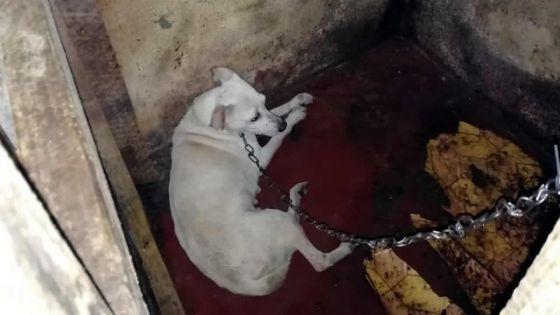 Maltraitance envers les animaux : 20 chiens retrouvés dans une cabane