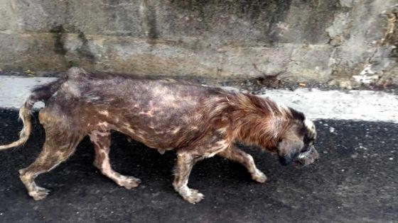 À Route Bassin : des chiens malades abandonnés