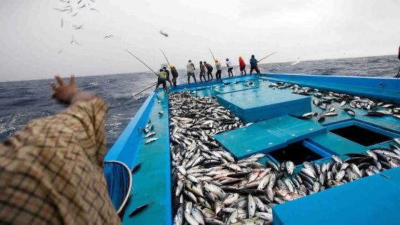 Coopération économique : un partenariat Seychelles / Maurice pour booster la pêche, dit l'EIU