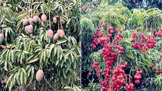 Fruits d'été : vers une bonne récolte cette année