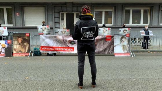 Manifestation à Bruxelles contre l'exportation de singes depuis Maurice