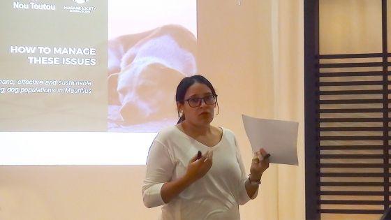 Stérilisation des chiens errants : une collaboration avec le gouvernement primordiale, selon Humane Society International