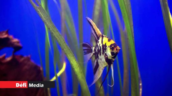 Importation des animaux et poissons vivants : l'interdiction sera levée temporairement