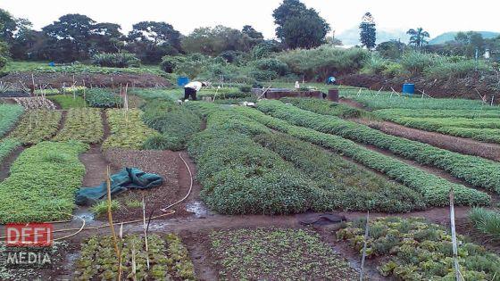 COVID-19 : Autorisation limitée pour planteurs et éleveurs