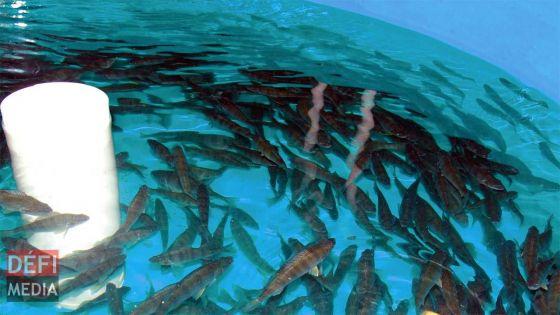 GrowFish : le ministère de la Pêche fait appel du jugement prononcé en faveur de l'AHRIM