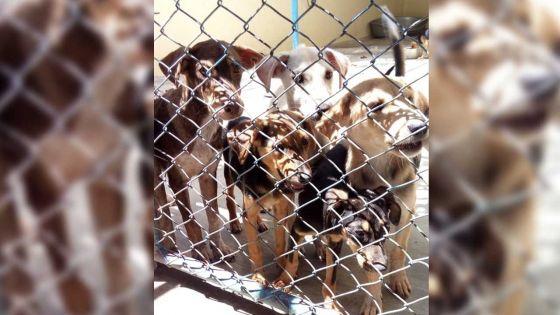 Rose-Hill : journée d'adoption pour recueillir un chien