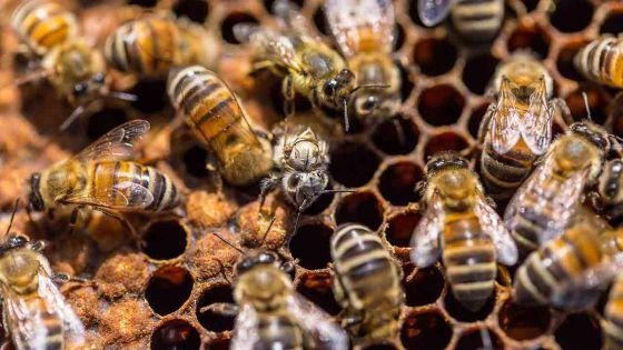 Des nids d'abeilles et des stands de miel volés à un apiculteur