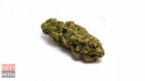 Bel-Air-Rivière-Sèche : 441 grammes de cannabis saisis ; trois arrestations