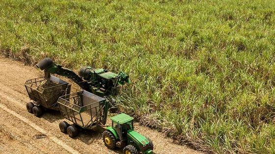 Campagne 2021:  la récolte sucrière risque d'être « moindre »