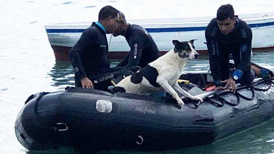 Montagne Zako: un chien sauvé de la noyade par des plongeurs de la NCG