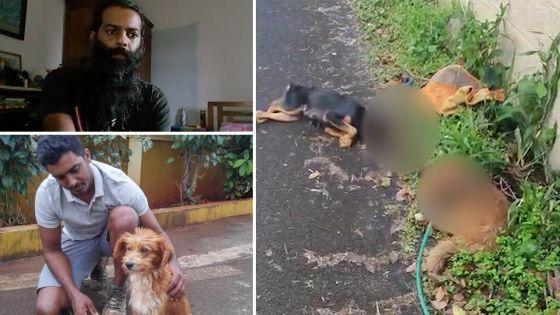 Forest-Side : deux chiens torturés, selon un habitant de la région