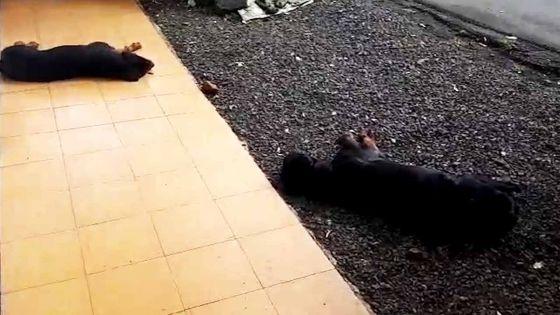 Vacoas : deux Rottweilers tiennent une famille « en otage »