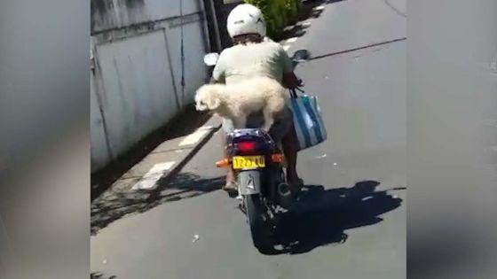 Calodyne : il promène ses trois chiens sur sa moto