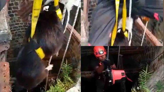 Mapou : sauvetage d'un chien tombé dans un puits