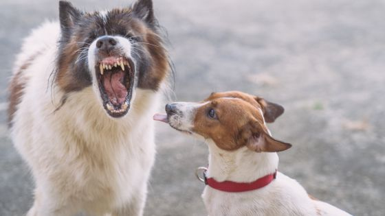 « Au Cœur de l'Info » : faut-il durcir la loi contre les propriétaires de chiens irresponsables ?