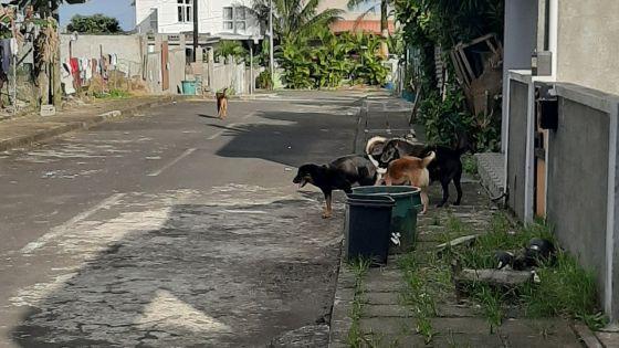 New-Grove : des chiens errants nuisent au quotidien des habitants pendant le confinement