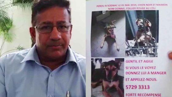Ben, un habitant de Quatre-Bornes : « Aidez-moi à retrouver mon chien »