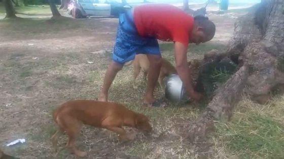Cap-Malheureux : rencontre avec Ivan qui s'arrange pour que les chiens errants aient de quoi à manger