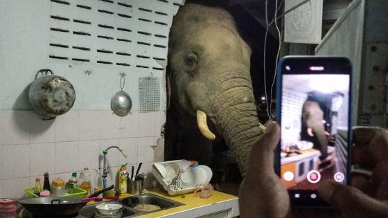 Un éléphant dans la cuisine : une famille thaïlandaise reçoit la visite répétée d'un mastodonte