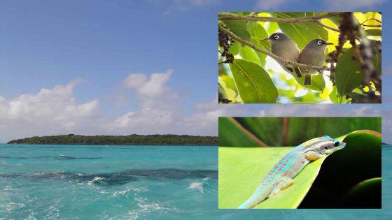 Défi Deal : une pause verte sur l'île-aux-Aigrettes