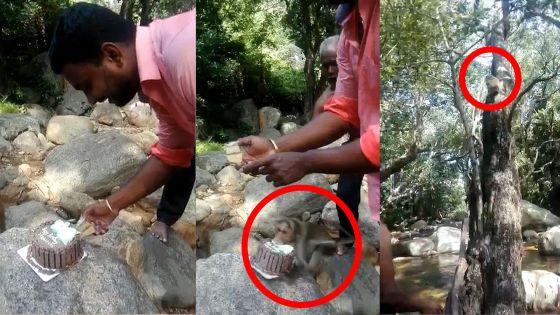 Vu sur la Toile : Affamé, le singe lui pique son gâteau d'anniversaire