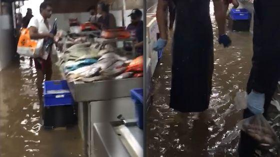 Foire de Quatre-Bornes : des poissonniers dans l'eau...