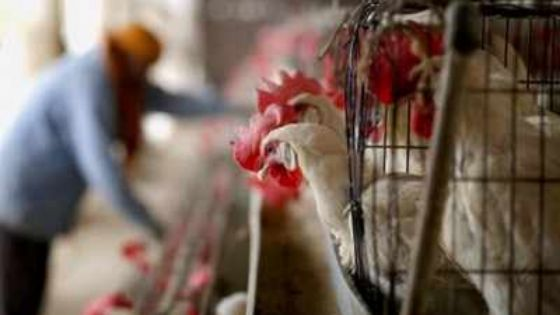 La grippe aviaire détectée dans 13 États de l'Inde et certaines régions de France