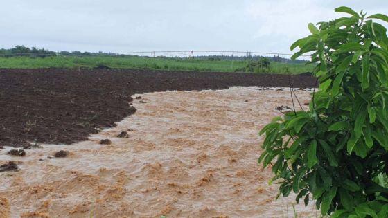 Forbach : l'eau envahit des plantations