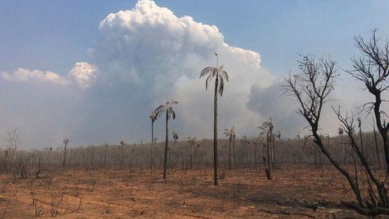 4 Minutes aux 4 Coins du Monde : Bolivie, quatre millions d'hectares dévastés par les incendies