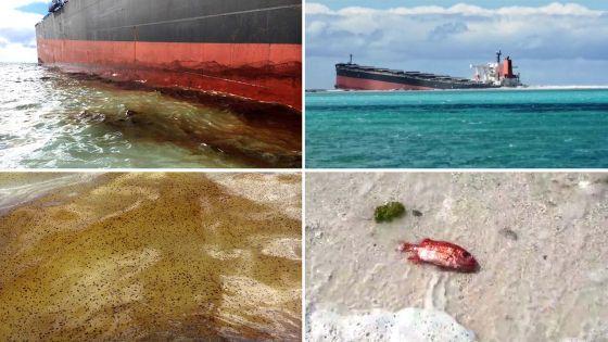 Du carburant s'échappe du Wakashio : des poissons morts découverts sur la plage de Pointe-d'Esny
