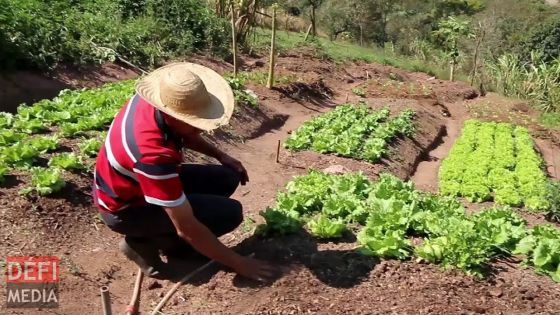 Appel de la Small Planters Association : «Cultivez vos propres légumes»