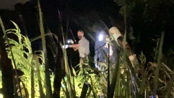 Côte-D'Or : le corps d'une femme découvert dans un champ de canne, son fils arrêté