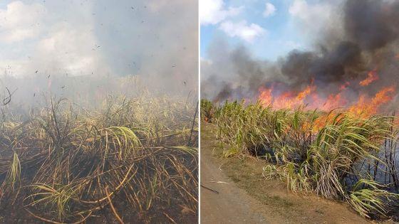 Trois-Mamelles : un champ de cannes ravagé par les flammes