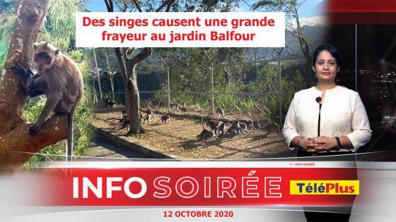 [Info Soirée] : Singes agressifs au jardin Balfour : «Zot kav bless zanfan», s'inquiètent des habitants