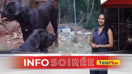 Pointe aux Sables : Deux cane corso s'échappent de leur cage, des habitants terrifiés