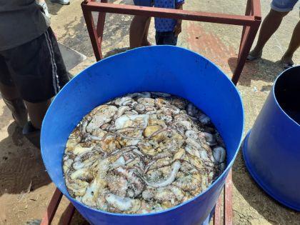 L'interdiction de la pêche au poulpe étendue de deux mois