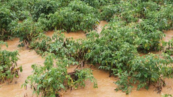 Intempéries : une hausse du prix des légumes inévitable, selon Kreepalloo Sunghoon