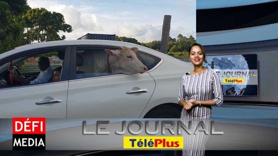 Le JT – Le mystère de « la petite vache dans une voiture » résolu
