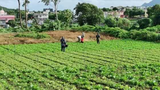 J-2 du Budget 2020-2021 : un milliard de roupies pour augmenter la production locale, demandent les petits planteurs