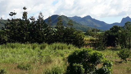 Mare-Chicose : un jardinier retrouvé mort dans un champ de canne