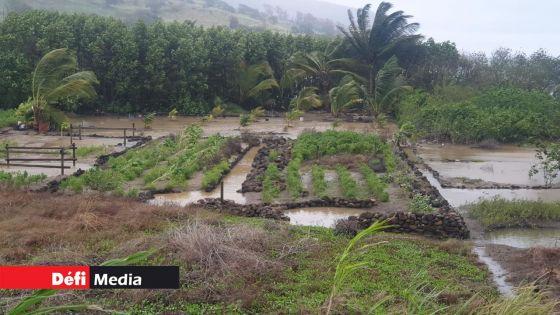 Tempête Calvinia : « 35 % à 40 % de la production de légumes affectés » ; un manque de légumes à partir du 10 janvier