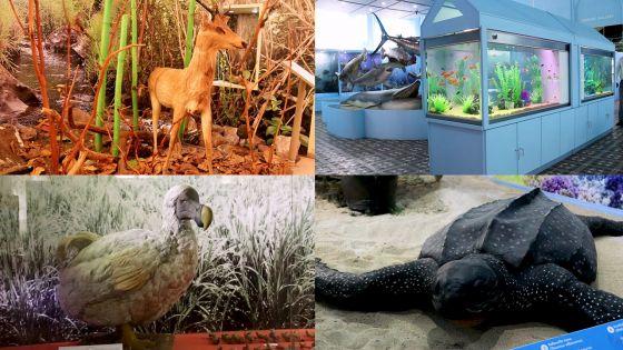 Découvrez le musée d'Histoire naturelle de Port-Louis