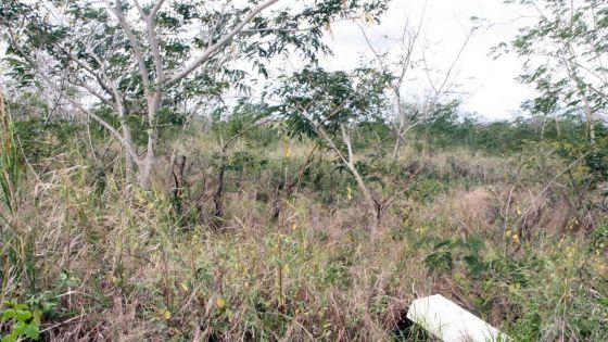 Terres de l'État : 549 arpents accordés à bail entre 2017 et 2019