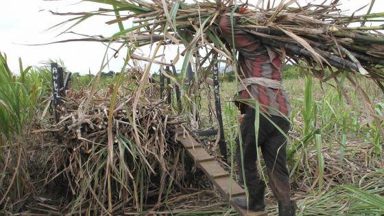 Le Mauritius Sugar Syndicate réclame l'introduction d'une nouvelle taxe au gouvernement
