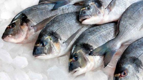 Quelques poissons prélevés dans le Sud-est avaient des traces d'hydrocarbures