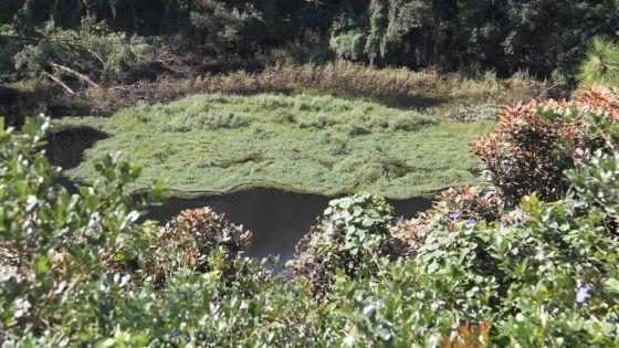 Trou-aux-Cerfs : ancien cratère d'un volcan dormant