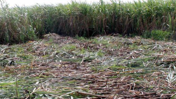 Industrie sucrière : le JNP fait appel à Maneesh Gobin
