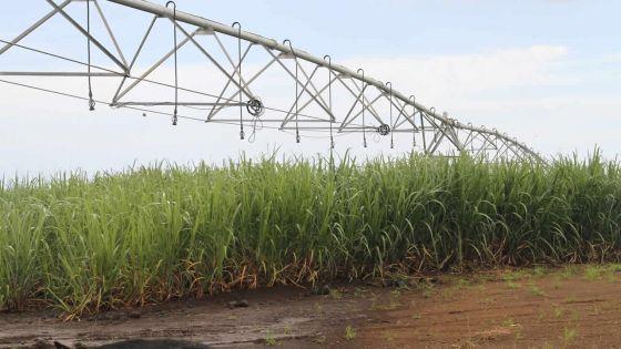 Impact de la sécheresse : l'Irrigation Authority ferme les vannes à moitié