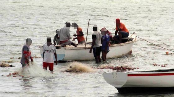 Saison de la pêche à la senne : baisse jusqu'à 25%du prix du poisson